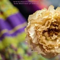Flores Florsali (8)