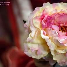 Flores Florsali (9)